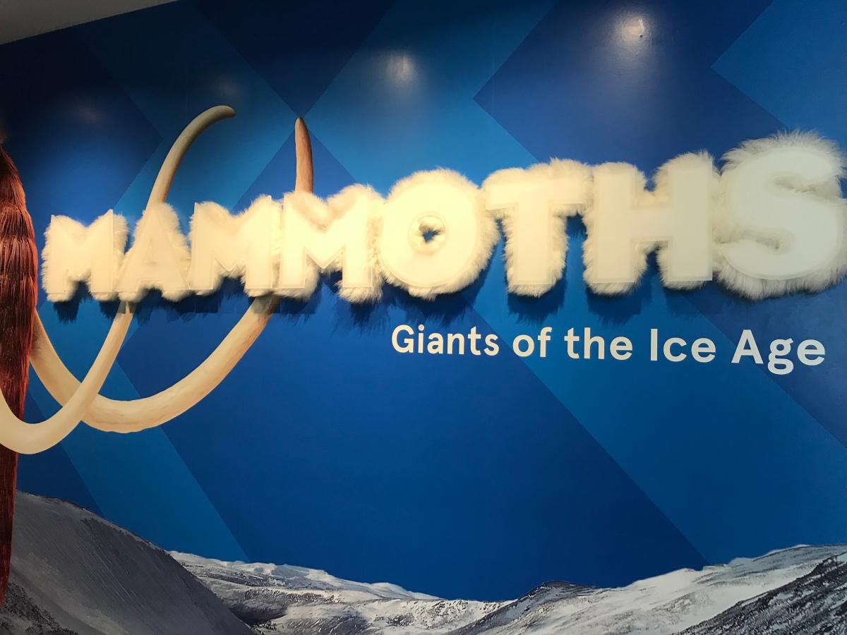 Australian Museum: Mammoths