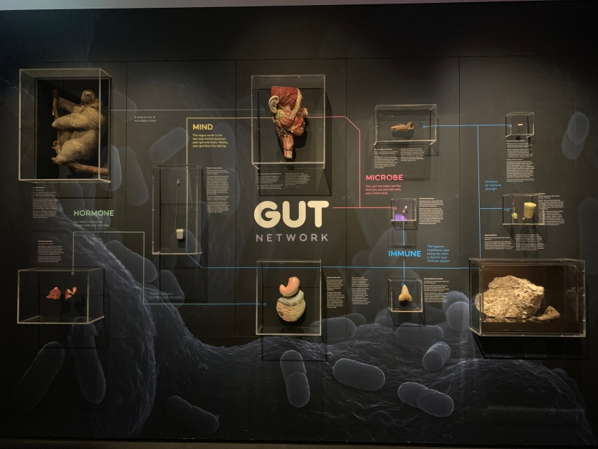 Gut Network highlighting microbe, immune, mind and hormone.
